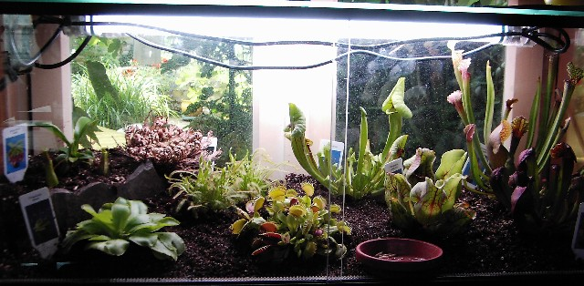 terrarium de plante carnivore
